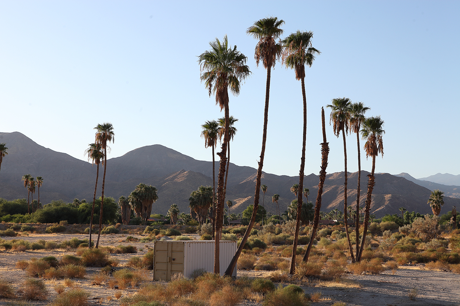Palm Springs desert photo Mona Awad